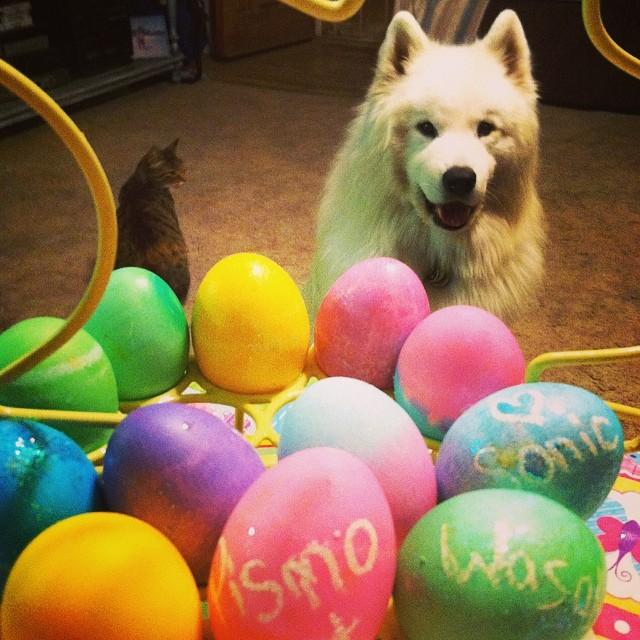 041914 easter eggs