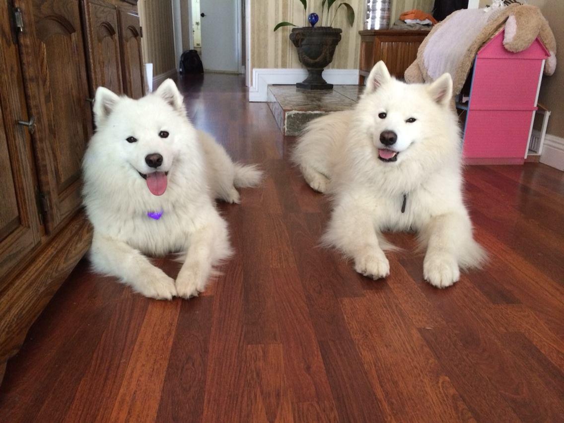 Bonzai and Nala