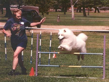 Mom and Digger.agility