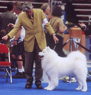 Ono and Dad at Eukanuba