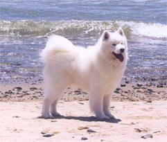 Ono-at-beach