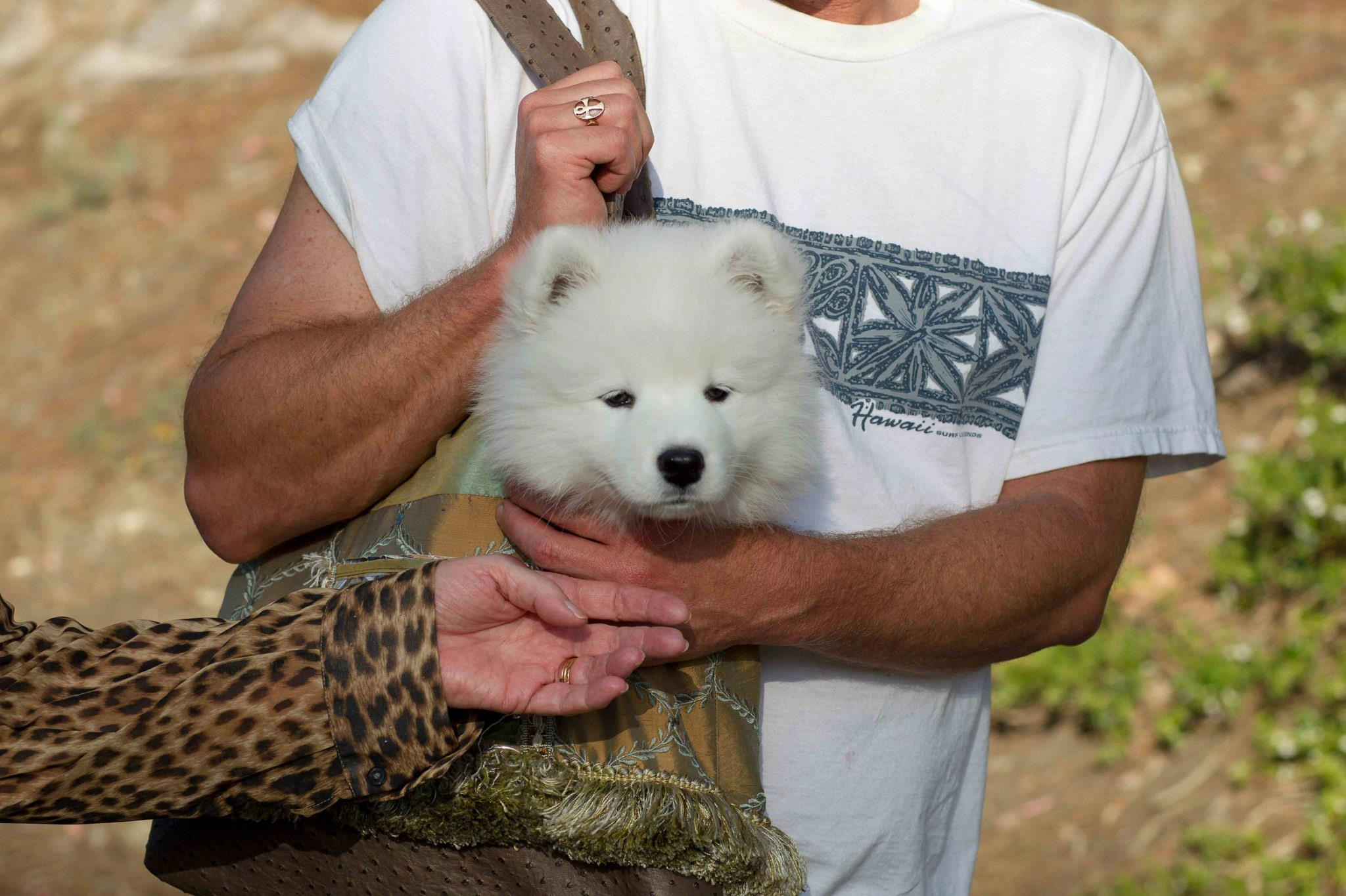 a purse puppy