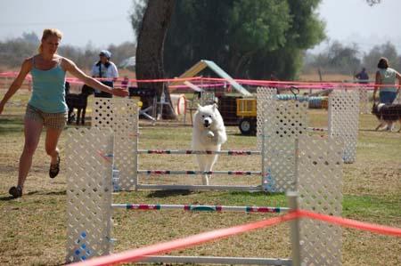 agility trial