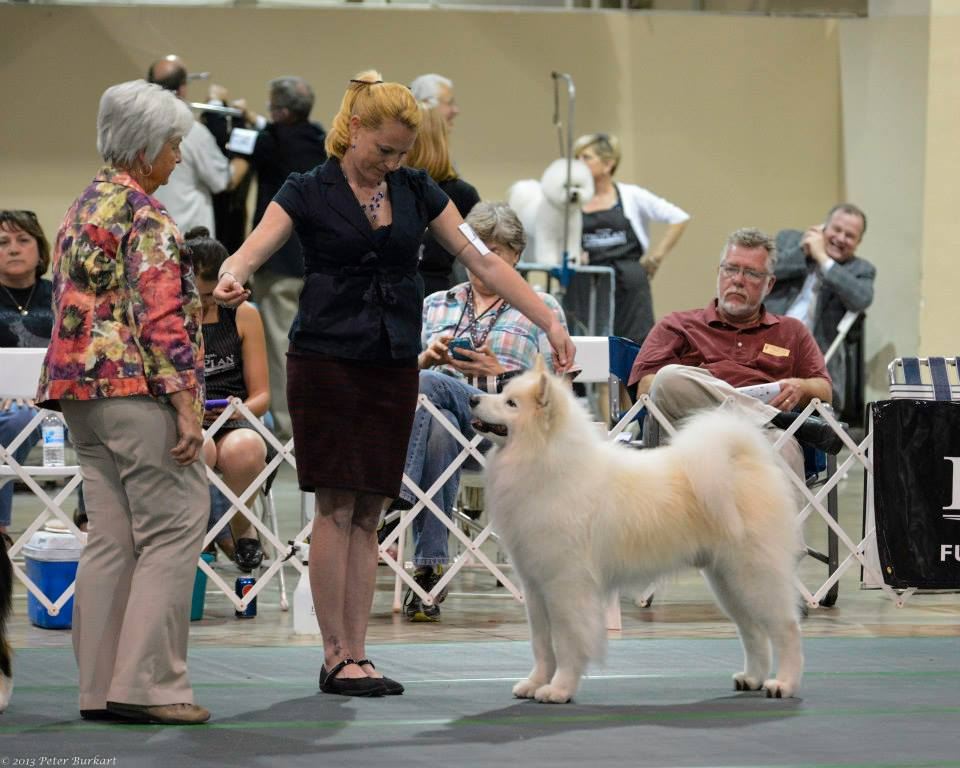 best in show judging