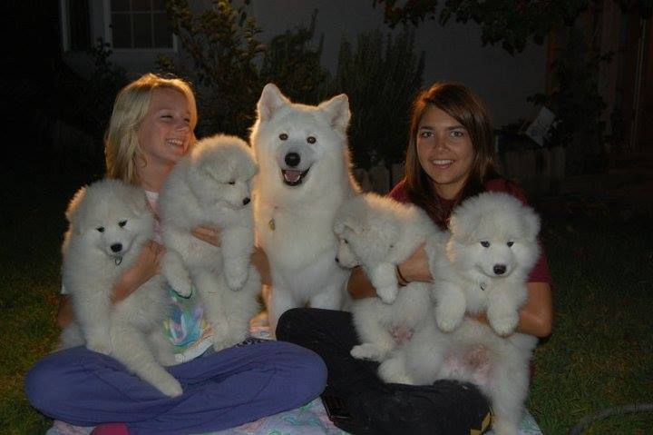 courtney marissa and pups before they went to new hoems