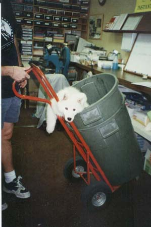 pup in trashcan