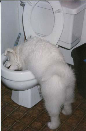 pup toilet