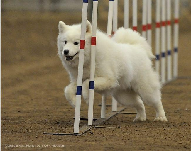weave poles