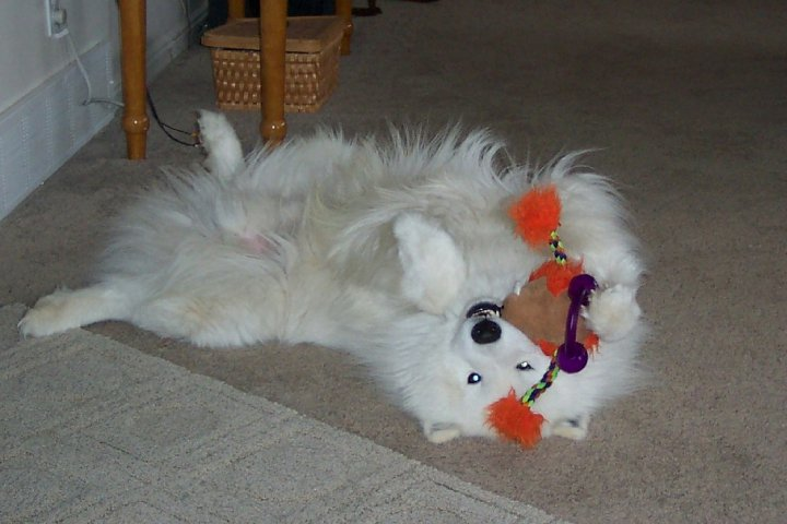 with his toy